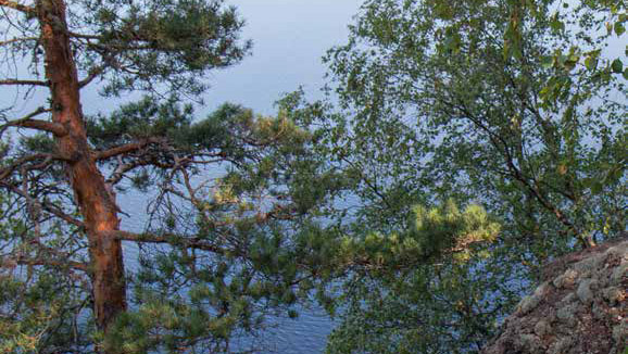 Maisema, jossa etualalla on kalliota ja puiden takana näkyy järveä.